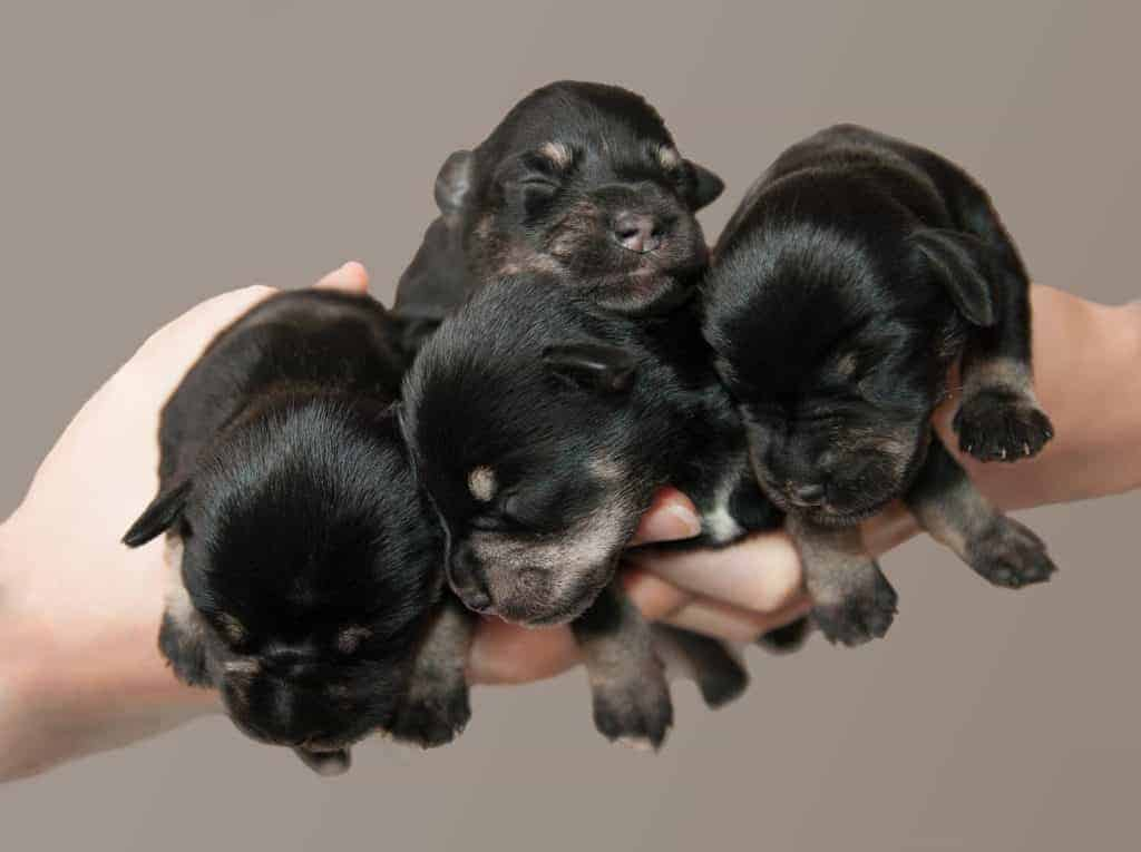 photo of newborn puppies