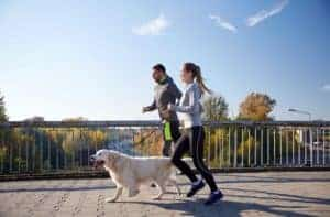 Dog Exercise - How Much Exercise Is Enough for Your Dog?
