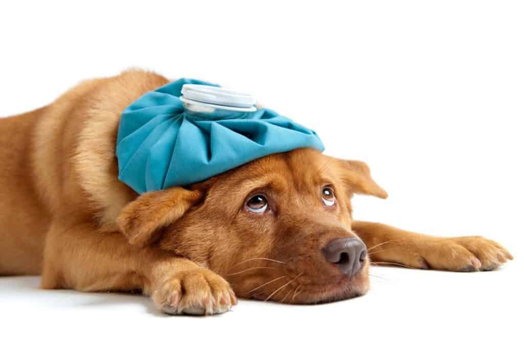 Photo of a dog feeling sick
