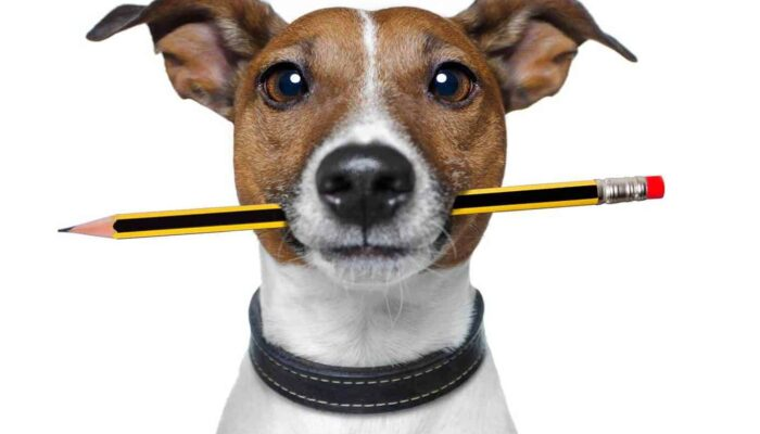 Help Me, My Dog Ate A Pencil What Should I Do?