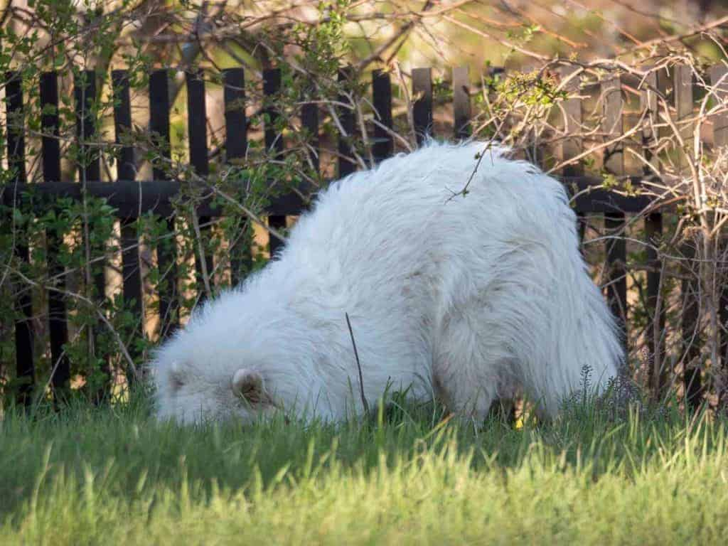 How Do I Stop A Dog From Digging Under A Fence?