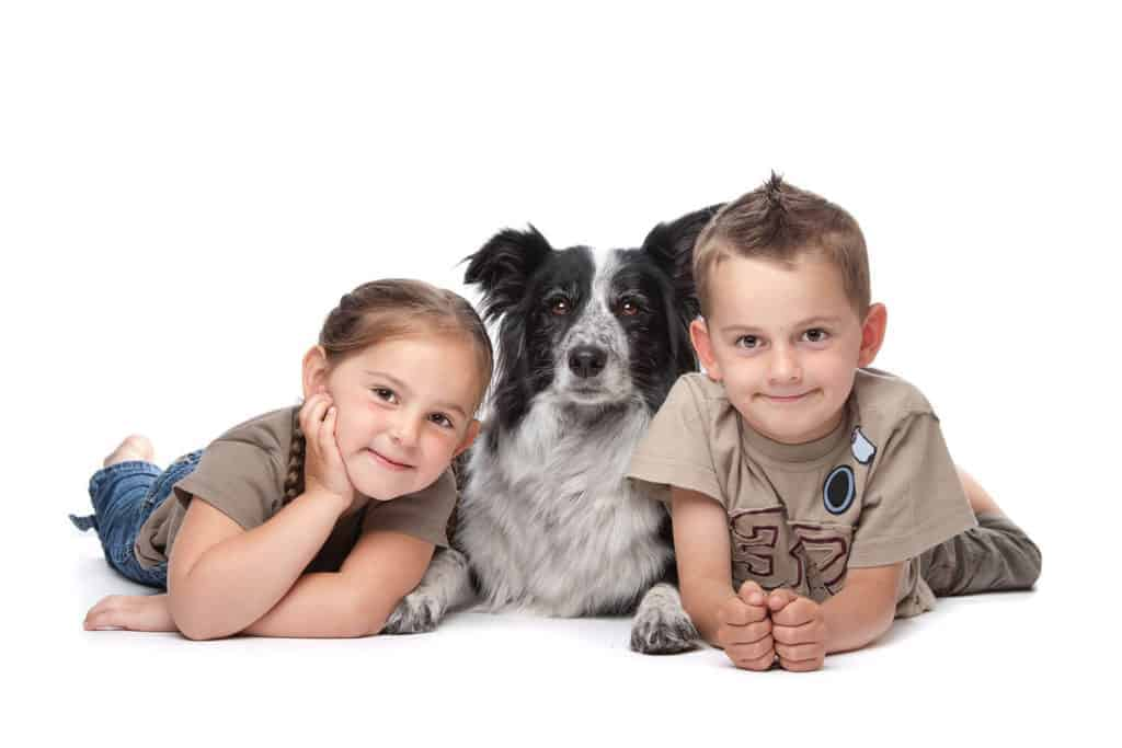Photo of children side by side with a dog border collie looking very friendly to each other