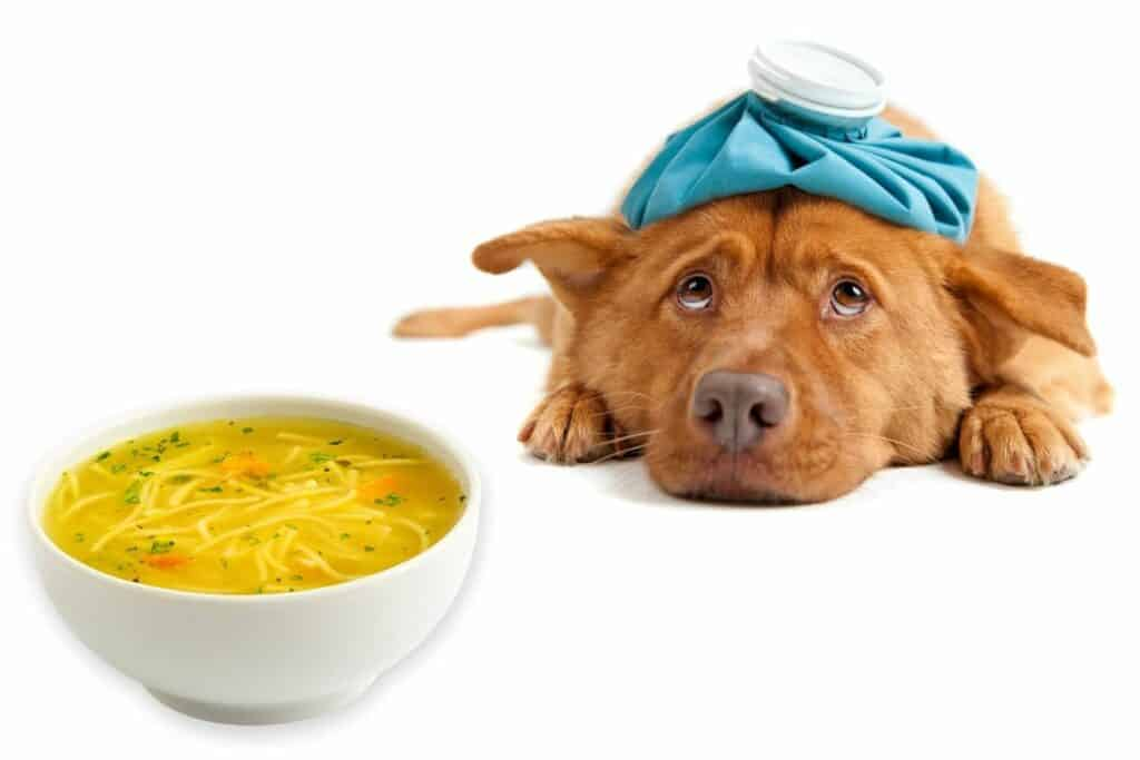 Can Dogs Eat Chicken Noodle Soup?