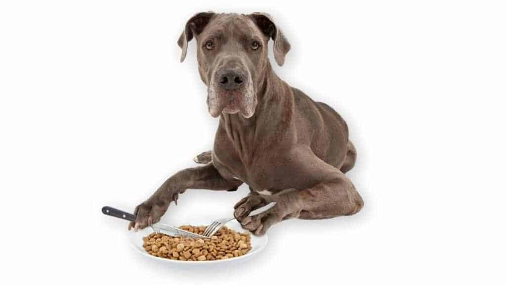 Great Dane eating food with a fork and a knife