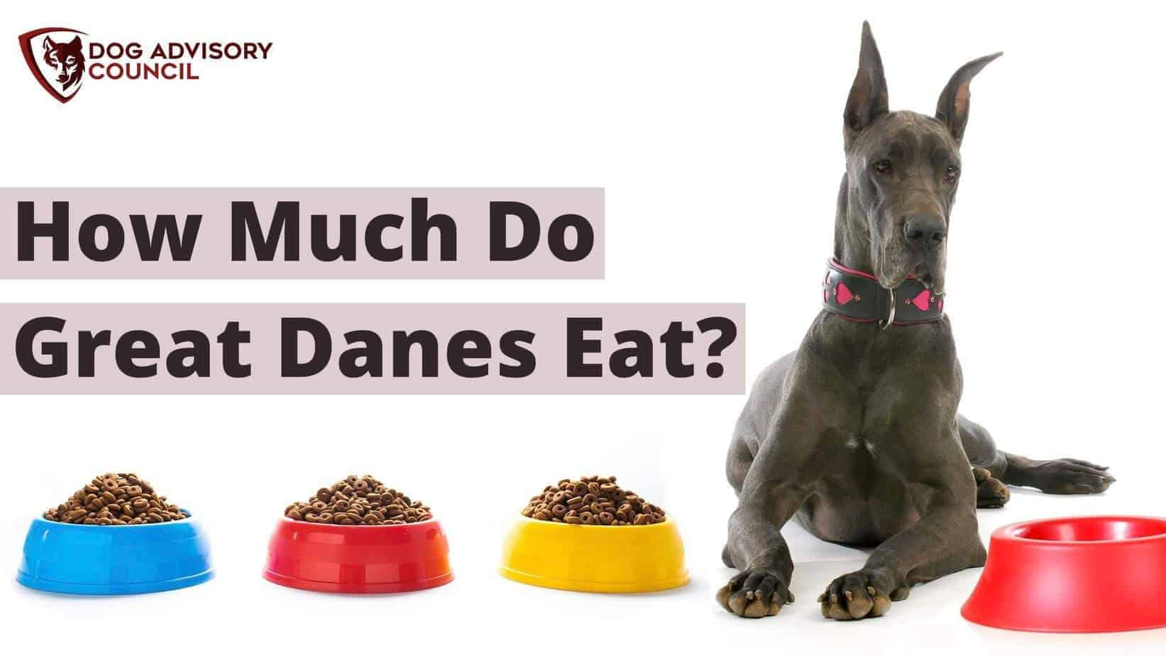 How much do Great Danes eat