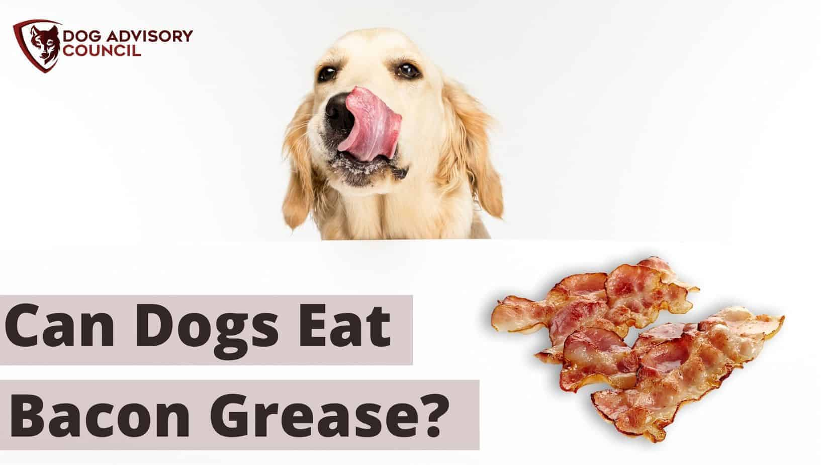 Can Dogs Eat Bacon Grease