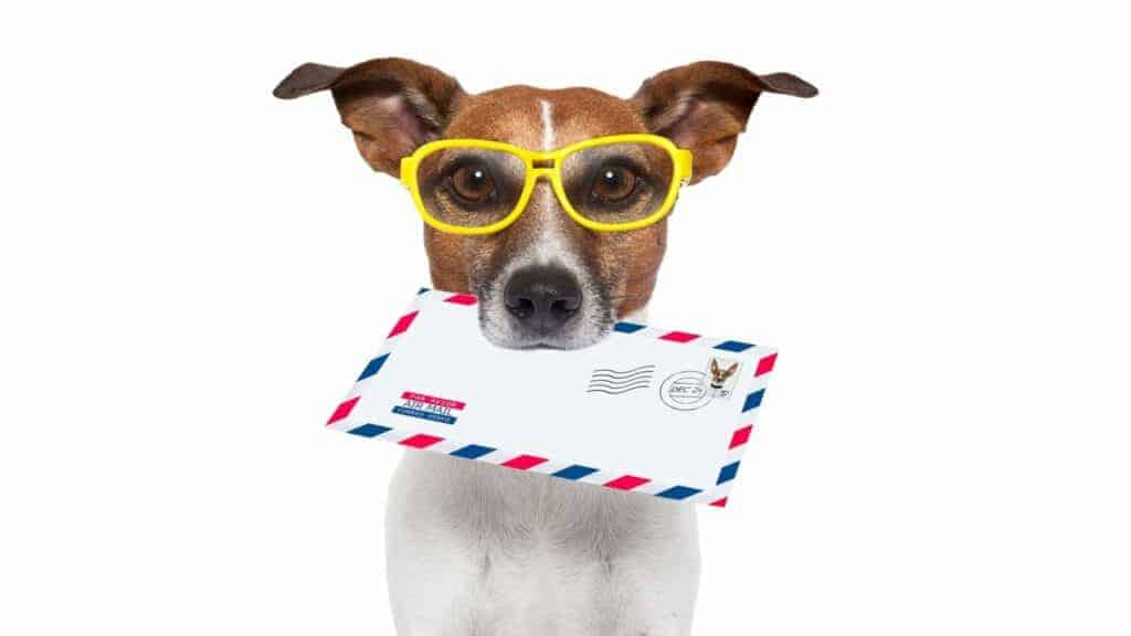 Photo of a dog with a mail letter in his mouth