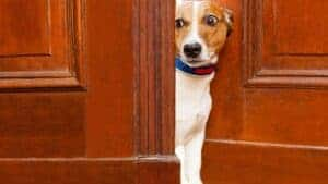Stop A Dog From Scratching The Door At Night