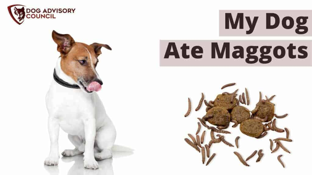 My Dog Ate Maggots - Photo of a dog looking at maggots on top of dog food