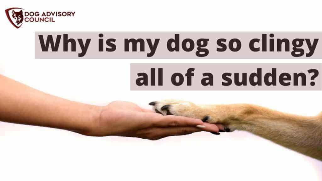 Why is my dog so clingy all of a sudden? Photo of a dog's paw on top of a human hand