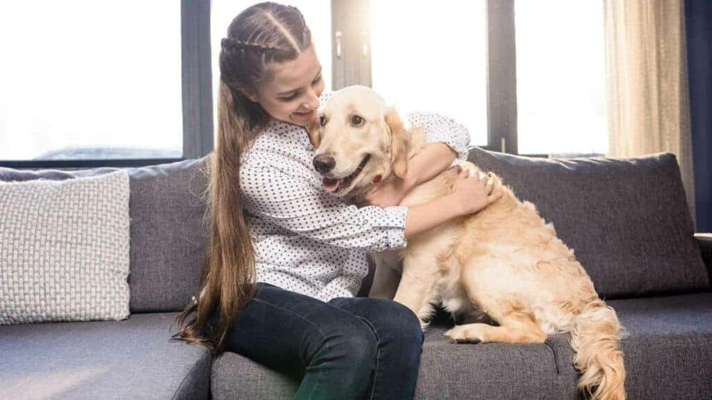 Photo of a dog being clingy on the couch with its owner