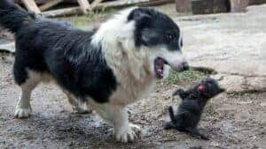 How To Stop A Dog From Being Aggressive Towards Cats