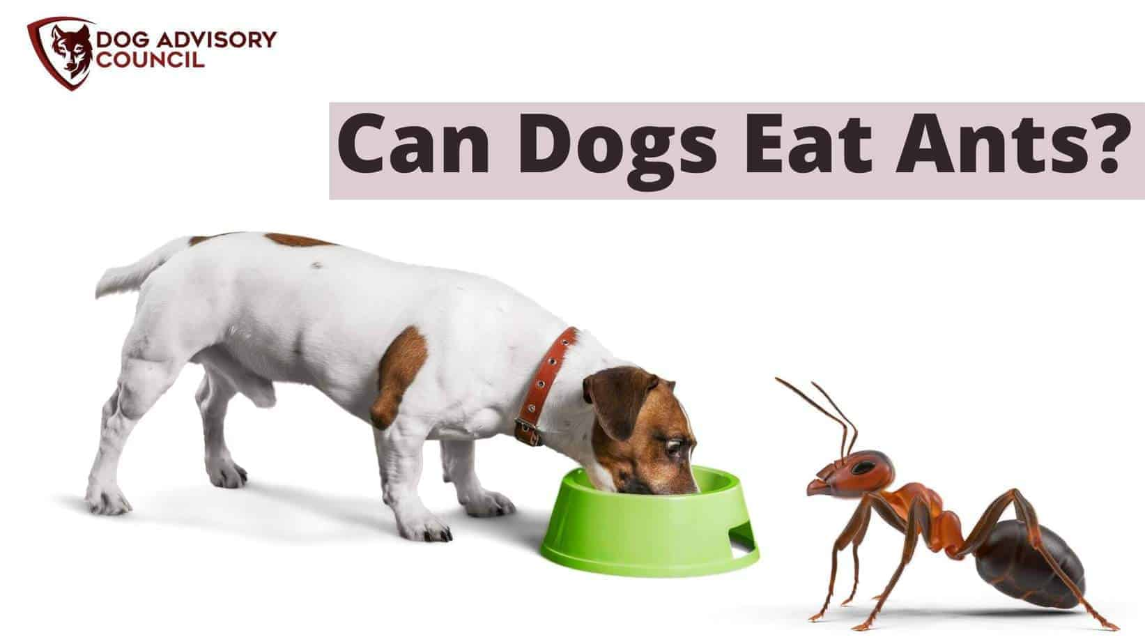 Can dogs eat ants