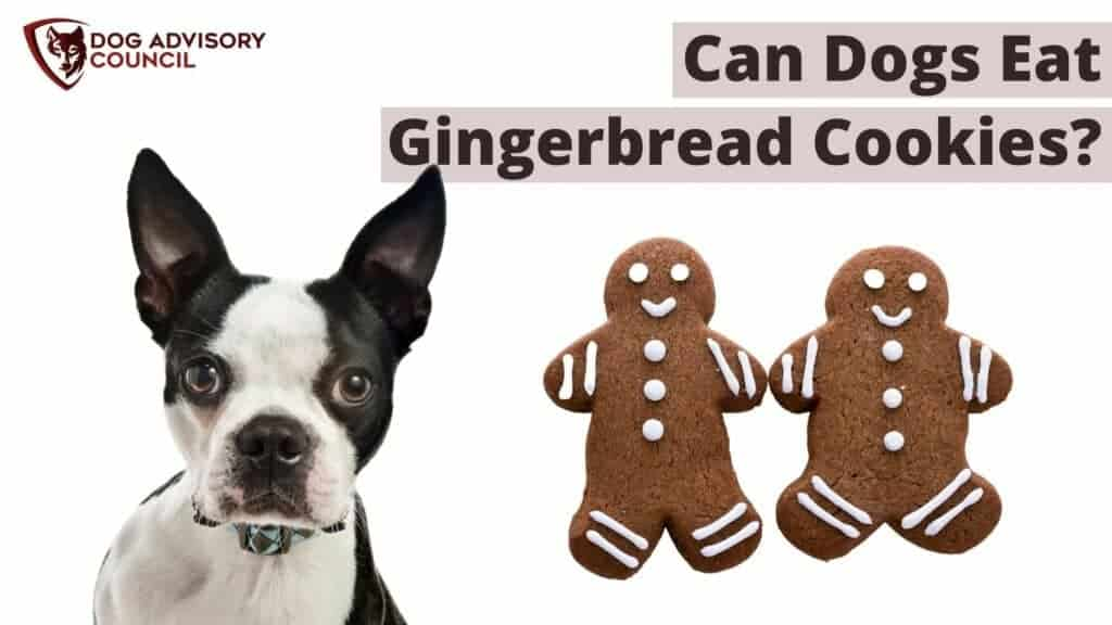 Can Dogs Eat Gingerbread Cookies? Photo of a dog and two gingerbread cookies.