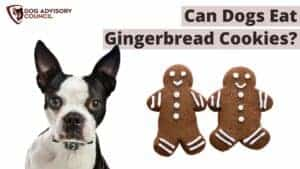 Can Dogs Eat Gingerbread Cookies