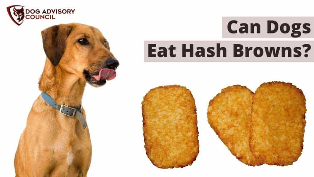 Can Dogs Eat Hash Browns? Photo of a dog looking into three hash browns and licking his lips.