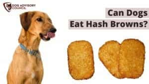 Can Dogs Eat Hash Browns