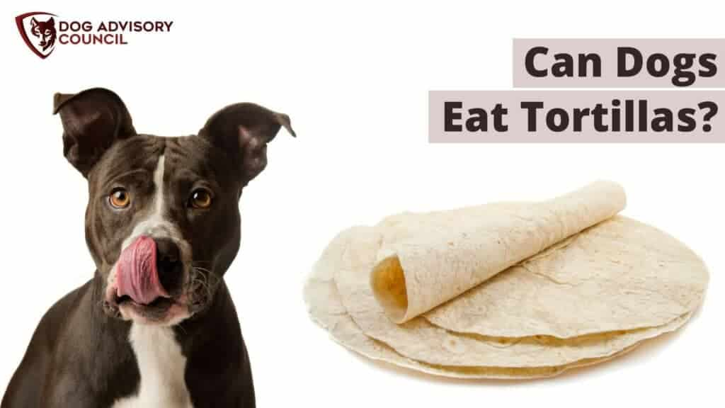 Can Dogs Eat Tortillas? Photo of a dog and tortillas